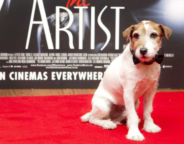 uggie-the-artist