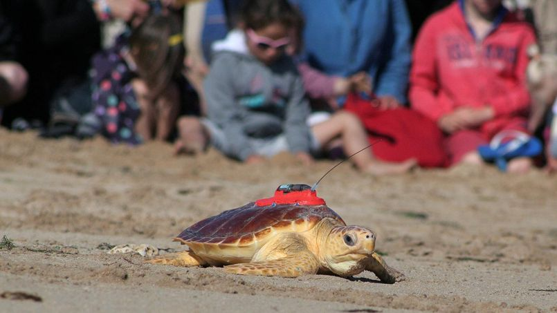 tortue-satellite